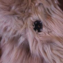 Bézs szőrmebunda (11-12 év)